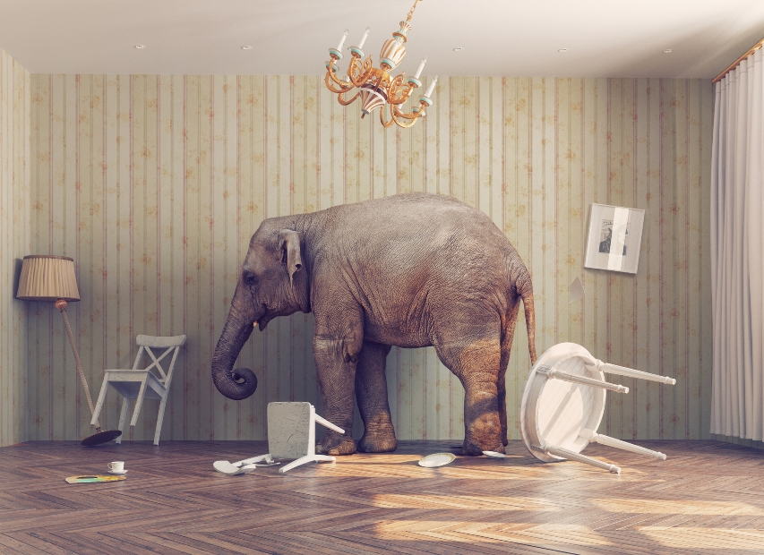 """What worries keep seniors up at night? What """"elephants in the room"""" remain unacknowledged?"""